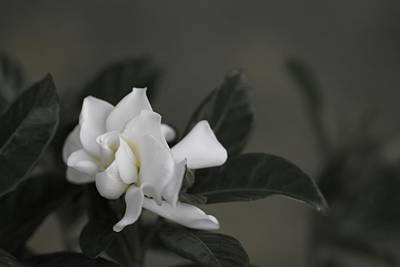 Floral Photograph - Serene by Jade Moon