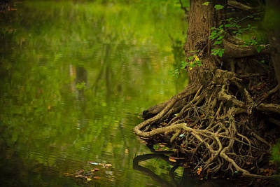 Tree Roots Photograph - Serene Stream by Shane Holsclaw