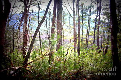 Photograph - Serene Woodlands by Cynthia Mask