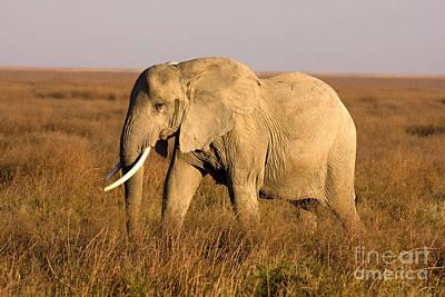 Farm Life Paintings Rob Moline - Serengeti Elephant by Chris Scroggins