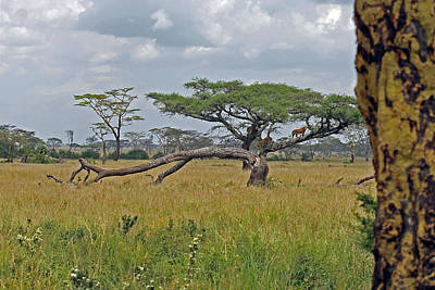 Photograph - Serengeti Landscape With Lions by Tony Murtagh