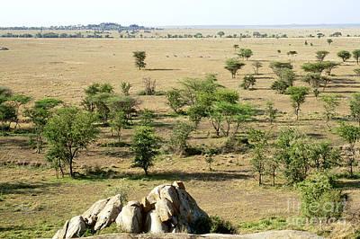 Serengeti Plains Art Print