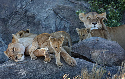 Photograph - Serengeti Pride by David Beebe