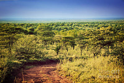 Grimm Fairy Tales - Serengeti savanna landscape in Tanzania. Africa. by Michal Bednarek