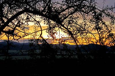 Photograph - Serengeti Sunset by Tony Murtagh