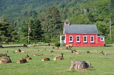 Little Red School House Photograph - Serenity by Dennis Blum