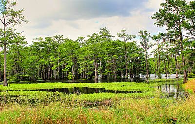 Louisiana Swamp Photograph - Serenity by Ester  Rogers