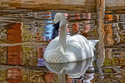 Serenity In Color Art Print by Rick Lewis