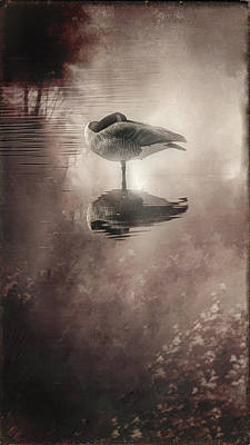 Serenity Art Print by Kelly Gibson