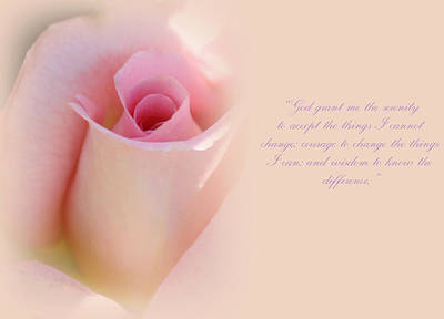 Pink Roses Photograph - Serenity Prayer by The Art Of Marilyn Ridoutt-Greene