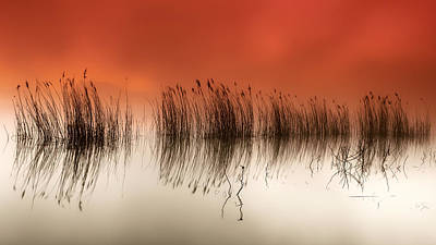 Reed Photograph - Serenity by Rui David