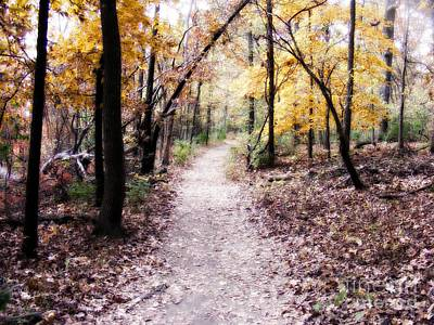 Autumn Peggy Franz Photograph - Serenity Walk In The Woods by Peggy Franz