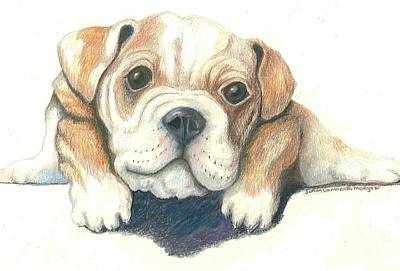 English Bull Dog Drawing - Serg by JoAnn   Morgan