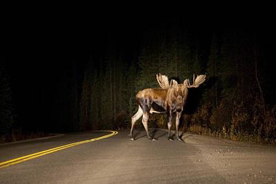 Serious Road Hazard Print by Tim Grams