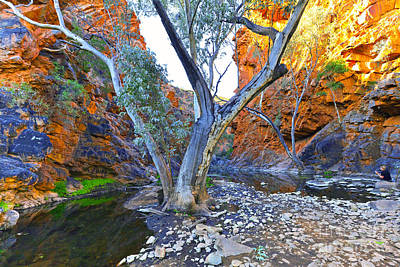Serpentine Photograph - Serpentine Gorge by Bill  Robinson