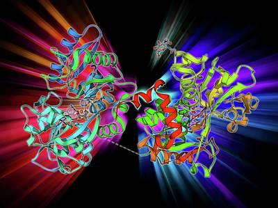 Molecular Structure Photograph - Serum Transferrin Molecule by Laguna Design