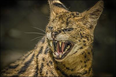 Carnivorous Photograph - Serval by LeeAnn McLaneGoetz McLaneGoetzStudioLLCcom