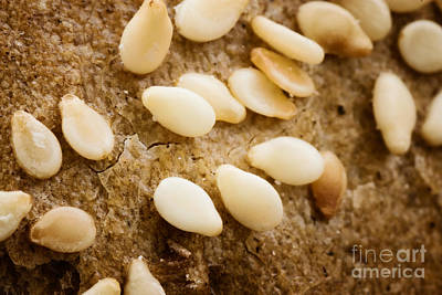 Sesame Seeds On Bread Crust Art Print by Mythja  Photography