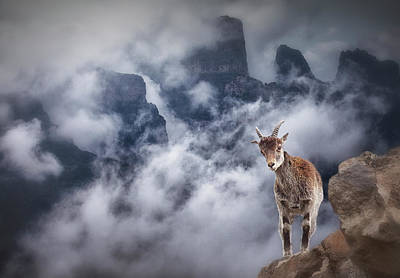 Mountain Goat Photograph - Sesmien Mountains by Marc Apers