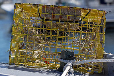 Photograph - Sesuit Harbor Lobster Cage by Juergen Roth
