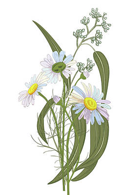 Digital Art - Set Of Chamomile Daisy Bouquets White by Olga Ivanova