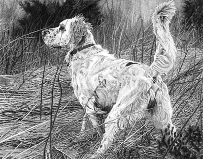 Drawing - Setter In The Field by Rob Christensen
