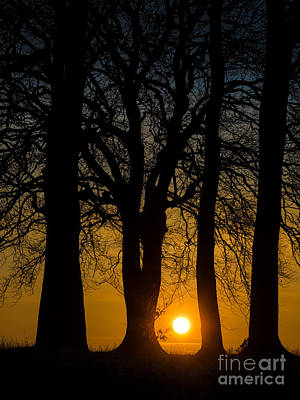 Setting Between The Trees - Wittenham Clumps Art Print by OUAP Photography