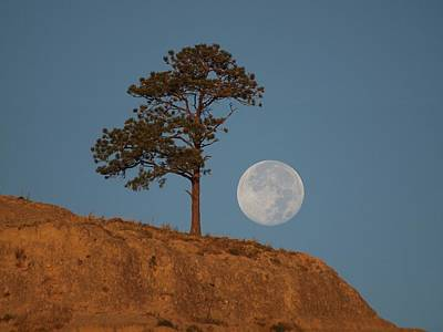 Photograph - Setting Harvest Moon by HW Kateley