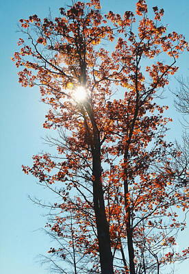 Photograph - Setting To Fall by Jesse Ciazza