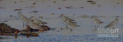Sandpiper Digital Art - Seven Seabirds Piping by Heidi Peschel