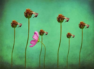 Seven Stems Art Print by David Dehner