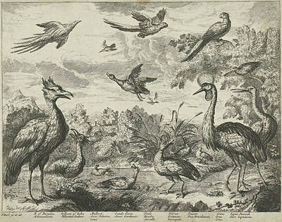 Pelican Drawing - Several Birds In A Landscape, Print Maker Jan Griffier by Francis Barlow