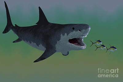 Several Tuna Fish Try To Escape Art Print by Corey Ford