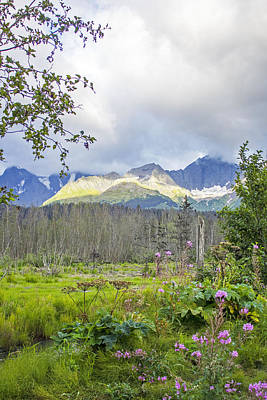 Photograph - Seward Alpenglow by Saya Studios
