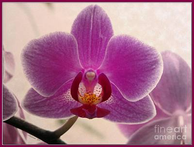 Photograph - Seymore Conservatory Orchid by Chris Anderson