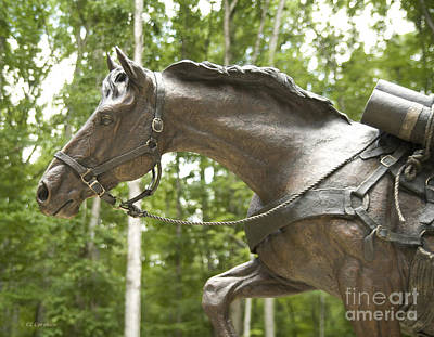 Photograph - Sgt Reckless by Carol Lynn Coronios