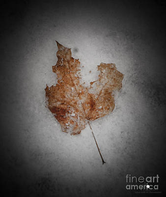 Photograph - Shabby And Brown by Grace Grogan