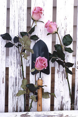 Cottage Floral Photograph - Shabby Chic Cottage Romantic Pink Roses Garden Tools  by Kathy Fornal