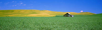 Shack Photograph - Shack In A Field, Palouse County by Panoramic Images