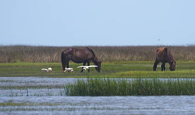 Bird Photograph - Shackleford Banks Ponies 2014 14 by Cathy Lindsey
