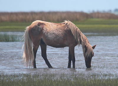 Horse Photograph - Shackleford Banks Ponies 2014 22 by Cathy Lindsey