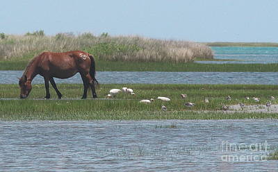 Horse Photograph - Shackleford Horse And Friends by Cathy Lindsey