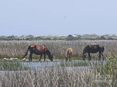 Gull Photograph - Shackleford Horses And Friends 2 by Cathy Lindsey