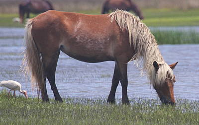 Wild Horse Photograph - Shackleford Ponies 2014 16 by Cathy Lindsey