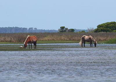 Ibis Photograph - Shackleford Ponies 2014 7 by Cathy Lindsey
