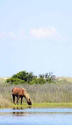 Cape Look Out Photograph - Shackleford Pony by Rex Williams