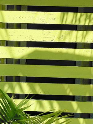 Photograph - Shade Of Green by Strangefire Art       Scylla Liscombe