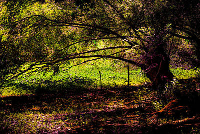 Photograph - Shade Tree by Edgar Laureano