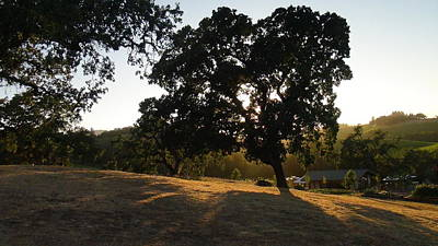 Shawn Marlow Photograph - Shade Tree  by Shawn Marlow
