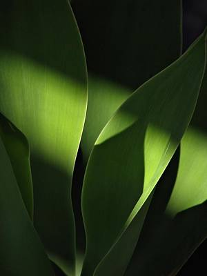 Photograph - Shaded Green by Liz Hill